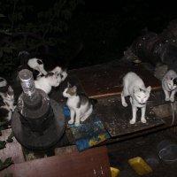 Кошки :: Татьяна Крылова