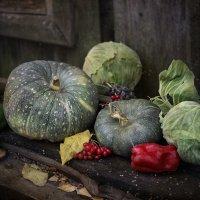 Урожай :: Анна Корсакова