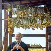 Урожай бабушки Лиды :: Валерий Талашов