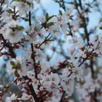 Холодная весна :: Лилия Лисова*