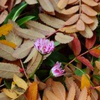 На ковре из жёлтых листьев... :: Ольга