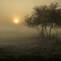 Пробуждение...4. :: Андрей Войцехов