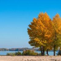 Осенний пляж :: Alex P.