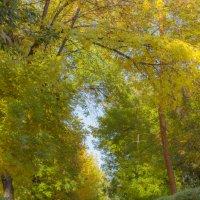 Осень в Волгограде :: Марина Скоробогатова