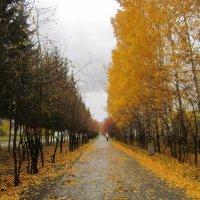 Аллея осенью . :: Мила Бовкун