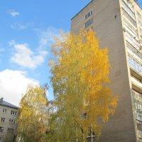 осень в городе :: надежда