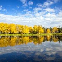 Golden autumn :: Евгений Балакин