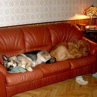 Собаки отдыхают :: Сергей