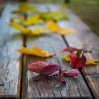 Осень. :: Валерий Клинин