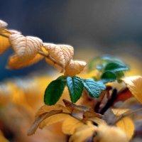Из осени весна :: ВАЛЕРИЙ