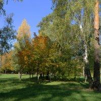 Осенний этюд :: Ирина Олехнович