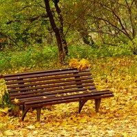 Осенью в парке :: Александр Запылёнов