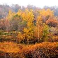 Осенняя пора,очей очарованье... :: Сергей F