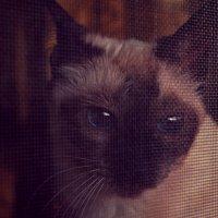 Кошка :: Софья Оганова