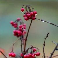 ..Сладку-ягоду рвали вместе.... :: Виктор Перякин