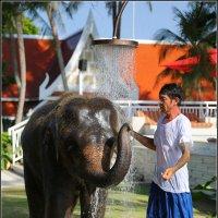 Душ для слоника :: DimCo ©