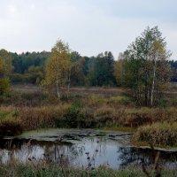 осень и печаль ходят рядом... :: Арина Минеева