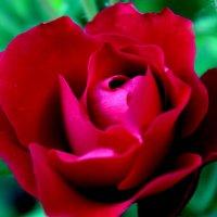 Цветы — это свободная красота в природе. :: Оксана Мельниченко