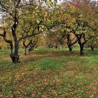 Дьяков сад :: Nikolay Monahov