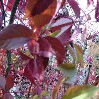 цветная осень :: Galina194701
