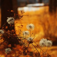 Осень пушистая.... :: Александр | Матвей БЕЛЫЙ