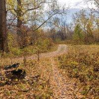 Осень в лесу :: Любовь Потеряхина