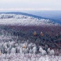 зима близко :: Юлия Вандышева