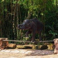Шоу слонов. Тайланд :: Александр Лядов