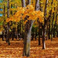 Осень в городском саду :: Николай Николенко