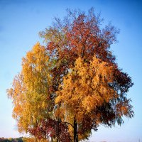 """""""Осень золотая.."""" :: Serg Y"""