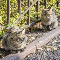 Осенние кошки :: Elena Ignatova