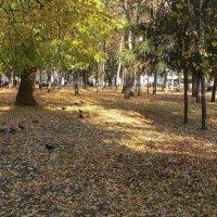 В городском парке :: Татьяна Черняева