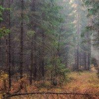 Туманный лес 2 :: марк