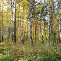 Лесные угодья . :: Мила Бовкун