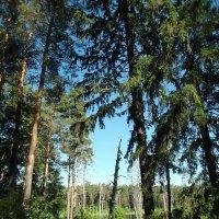 в лесу :: alecs tyalin