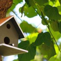 птичкин домик :: Ксения Халяпина