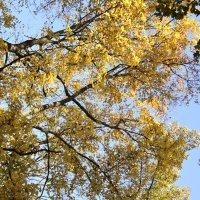 Осеннее золото :: Мария Климова