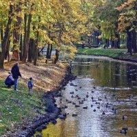 Городская осень :: Alexandr Zykov
