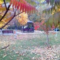 Осень во дворе :: Serg