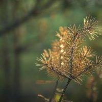 Осень :: Андрей Иванов