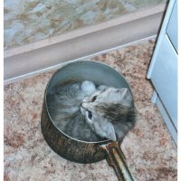 Вы просто не пробовали спать в кастрюльке! А говорите! :: Андрей Лукьянов