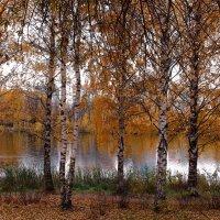 Осень, ты на грусть мою похожа :: Татьяна Ломтева