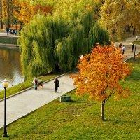 Золотые краски осени. :: Viacheslav Birukov