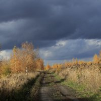 Дорога в осень 1 :: OlegVS S