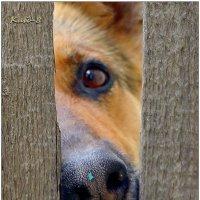 Любопытный нос соседского пса... :: Кай-8 (Ярослав) Забелин