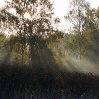 Солнце :: Алексей Дмитриев