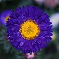 flora :: Марья Цалко