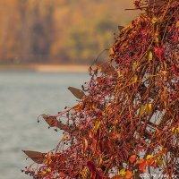 Осеннее :: Надежда Лаптева