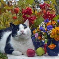 Дачный натюрморт с котом. :: Романенко Людмила Ивановна