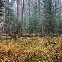Туманный лес 4 :: марк